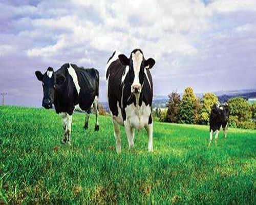 中荷合作助力乳品行业!河南制冷罐厂家透漏乳品发展趋势大好!